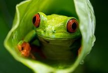 Insects, Spiders, Frogs & Snails / photos of insects, spiders, frogs and snails.