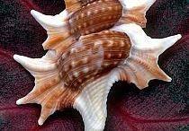Ocean Sea Shells