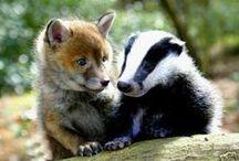 ANIMAL • Baby Animals