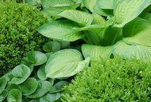 ogród / zielone jest piękne