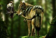 wolf / wilczy instynkt