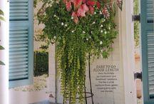 Container garden / Annuals