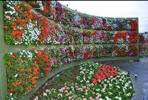Keře a květiny
