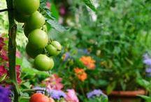 Edible Garden Designs