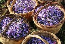 EO | Bath, Beauty, Spa, Potpourri and Aromatherapy / DIY ideas for bath, beauty, health, wellness, spa and aromatherapy. In early 17th Century France fresh herbs and flowers were gathered—starting in spring and continuing throughout the summer. In fall, spices would be added and set out in potpourri pots with perforated lids to perfume rooms.  / by Bluebird CSA.com