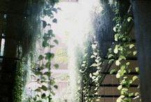 backyard riad / by Michelle F