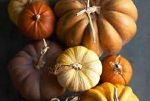 Pumpkin / Farm box heirloom and Sugar Pie Pumpkin recipe ideas...try to contain yourself, the season of pumpkin EVERYTHING is here! / by Bluebird CSA.com