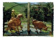 Dream Farm /   dream house,land,furnishings,animals ect. / by Andrea Chaput