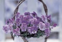 Plum+Silver / by Andrea Chaput