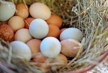 Farm | Eggs / Farm Eggs....Easter Egg Hunt...Natural Egg Dyes... Delicious Goodness / by Bluebird CSA.com