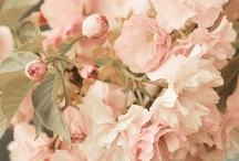Flowers 2.0 / by Marilyn DeNoia