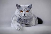 Cats / by Rachel