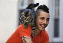 Celebri-kitties