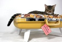 Cats in Suitcases, Boxes and... Shoes