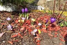 Frühlingszeit im Almrausch / Eine sehr schön Jahreszeit ist angebrochen in Bad Kleinkirchheim. Die Nockberge wachen aus Ihrem Winterschlaf auf und zeigen Ihre volle Pracht. www.almrausch.co.at