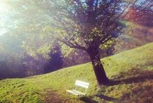 Herbstgenuss am Berg