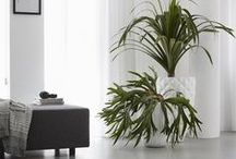 Capi Indoor / Planters that will enrich your interior: cozy - happy - fanciful