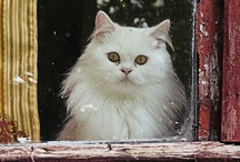 Cat in the Window / by dachweiler