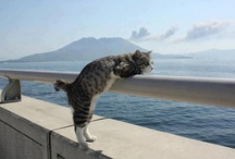 Picturesque Cats / cats in beautiful and/or interesting scenery / by dachweiler