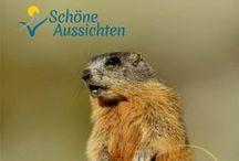 Sommer in der Schweiz / Switzerland / Ideen und Anregungen für einen schönen Sommerurlaub in der Schweiz