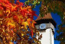 Herbst in der Schweiz / Switzerland / Schweiz Urlaub