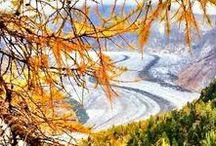 Aletsch Arena - Wallis/Valais / Wunderbare Ferien in der Aletsch Arena! Beliebte Ferienorte wie Riederalp, Bettmeralp und Fiescheralp versprechen einen wunderbaren Urlaub in einzigartiger Natur! Ein besonderes Highligh: der Aletsch Gletscher, der längste Gletscher der Alpen!  http://www.schoene-aussichten.travel/region/aletsch-arena/