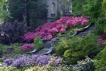 Garden Serenity / by Anita Lee