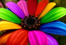 Colors / Colors are the opposite to my black and white.  While black and white is dramatic, colors are vibrant and fun.