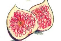 food - illustration