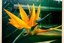 Flowers Fiori Fleures λουλούδια  / Fiori per tutti i gusti ...