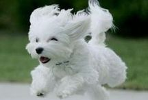 DOGS, DOGS, DOGS!! / Cute, special, loving, wonderful, funny dogs.  / by Lynne Hylton