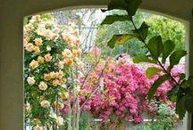 Side Garden Ideas / by Anita Lee