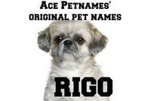 Original Dog Names / Original dog names. We post names from our ace-petnames.com site. Distinctive, unique and dog befitting pet names.