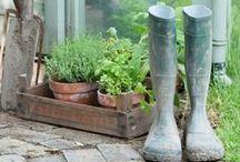 Urban Gardening / Urban Gardening ist ein anhaltender Trend: Grüne Städte, Kleingärten, Stadtbegrünung, Vertikale Gärten, Kräutergärten, Gärtnern auf dem Balkon, Schrebergärten, Stadtgärten, Nachhaltigkeit, Umweltbewusstsein, Gemüsenanbau in der Stadt, Blumen und Bäume pflanzen