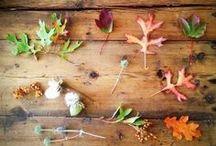 autunno sia