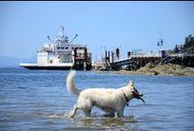 Fetch! Salt Spring Island Dogs