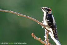 Birds of Salt Spring Island