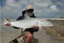 BONEFISH / Bonefish fly fishing.  Bonefish on the fly.