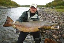 ATLANTIC SALMON / Fly fishing for Atlantic Salmon.  Atlantic Salmon on the fly.