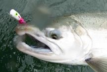 SILVER SALMON / Fly fishing for silver salmon or Coho salmon.  Silver salmon on the fly.  Coho salmon on the fly.
