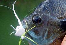 BLUEGILL / Fly fishing for bluegill.  Bluegill on the fly.
