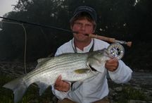 WIPER / Wipers on the fly, or hybrid striped bass on the fly.  Fly fishing for wipers, or hybrid striped bass.