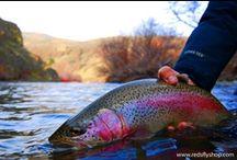 YAKIMA RIVER WASHINGTON / Fly fishing the Yakima River in Washington.