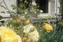 Fleurs du jardin / des petits moments où la nature nous réconforte