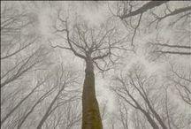 DE NATURAL ÁRBOL  -  TREES