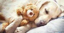 Sleepy Animals / Sleepy animals