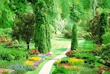 PLANTS and GARDENS