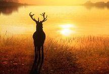 Deer, Elk, Moose