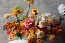 Floral - Warm Colors