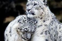 Animals / Animais.
